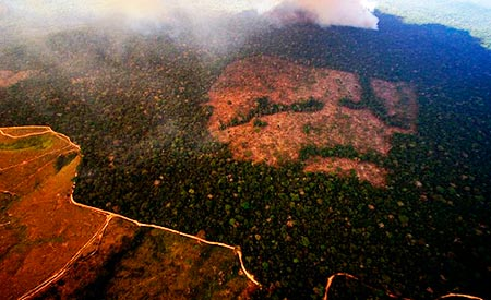 desmatamento-ecod