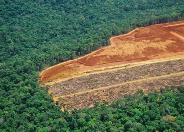 Deforestation in the Amazon - detail of an area