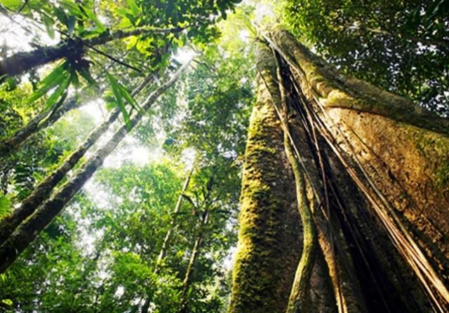 dia-de-protecao-as-florestas