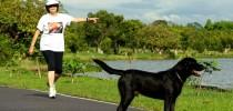 dilma-rousseff-caminha-com-cachorro-labrador-nego