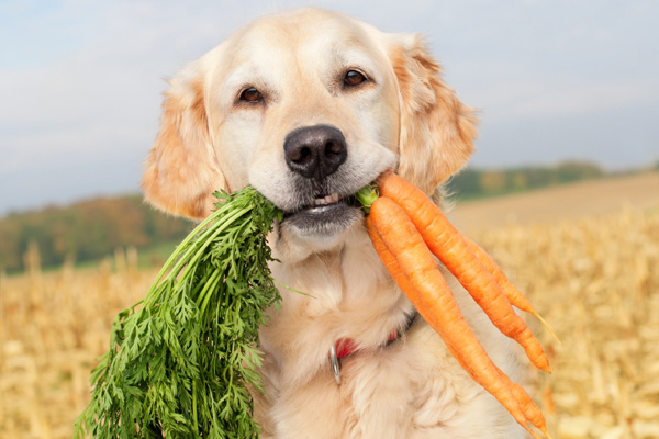 dog-eating-carrots