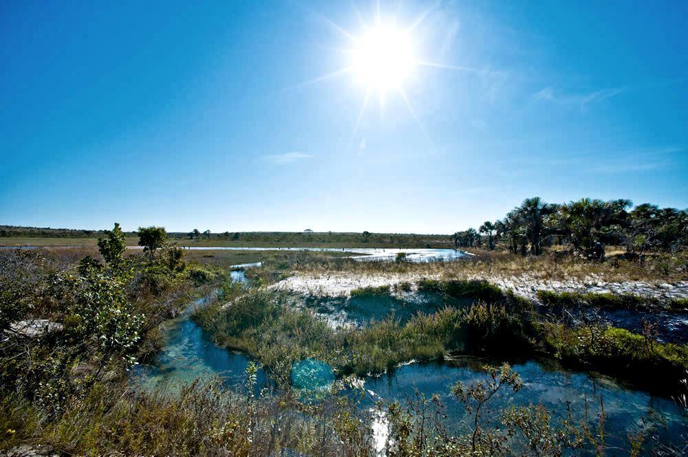 Cerrado brasileiro, o berço das águas.