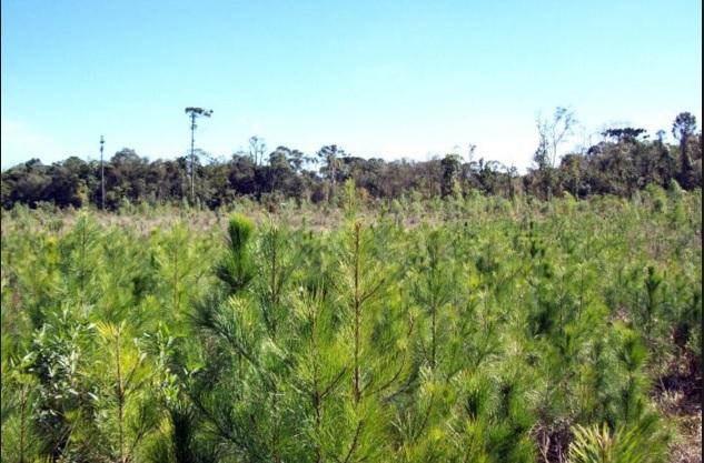 Espécies invasoras são consideradas a segunda maior causa da perda da biodiversidade mundial, depois apenas do desmatamento.