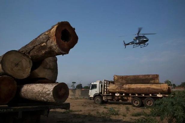 A extração ilegal de madeira continua sendo uma grande ameaça na Amazônia. Aqui, caminhões carregando árvores extraídas ilegalmente da floresta tropical são detidos pela agência brasileira de proteção ambiental.( foto de Lalo de Almeida, The New Yor Times)