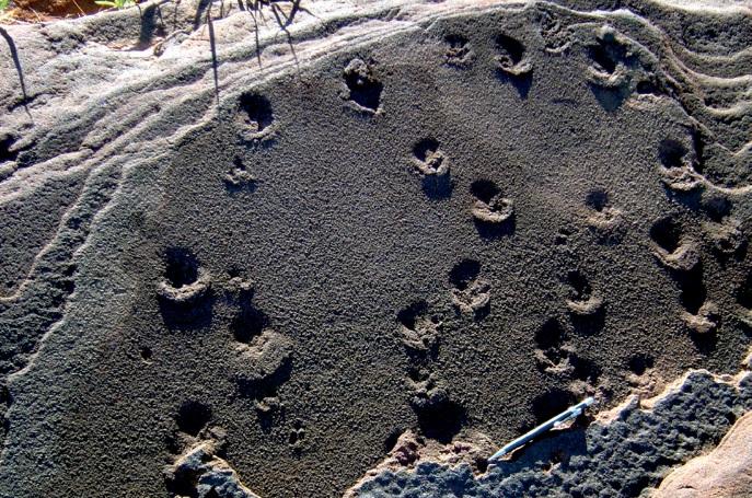 Rosana | Rastros de animais impressos nas rochas: Os arenitos da hidrelétrica de Porto Primavera guardam pegadas fósseis de animais que viveram na região entre 90 milhões e 65 milhões de anos