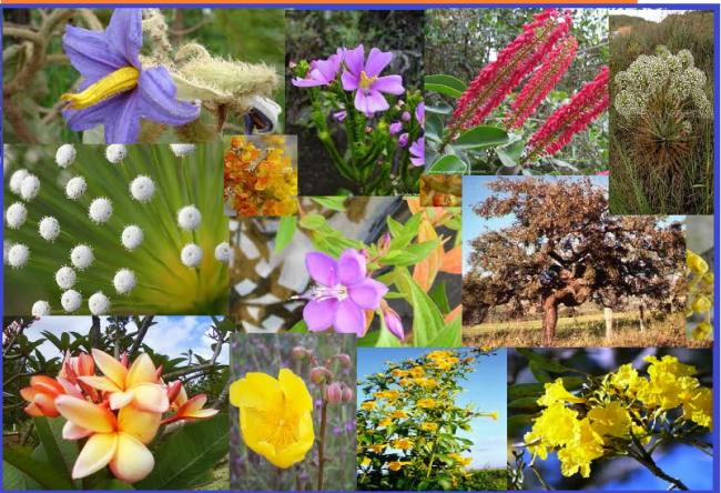 A beleza da flora do cerrado em sério risco de extinção