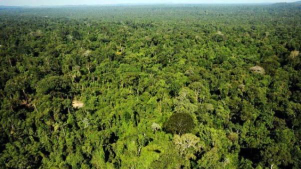 florestaparacompensacaoambiental