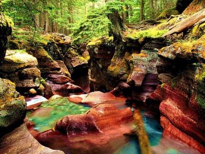 florestas0041
