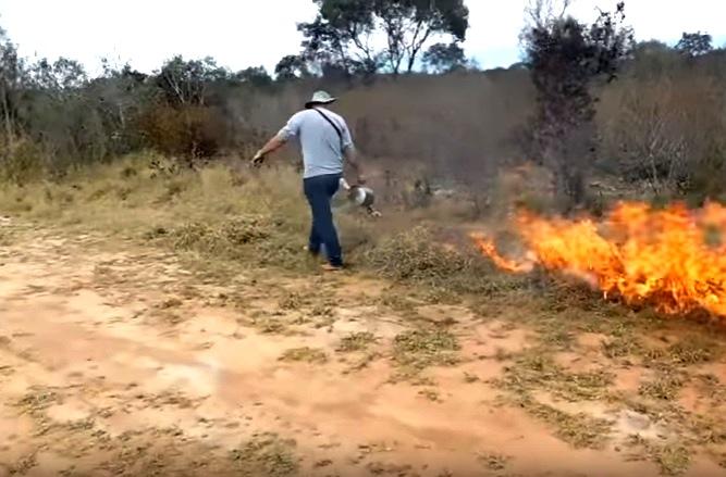 Manejo controlado do fogo no cerrado