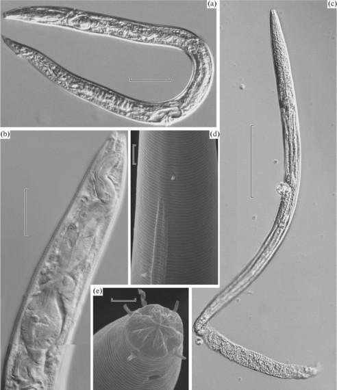 formas-de-vida-seres-vivos-descongelando-permafrost-polos-3-838x970