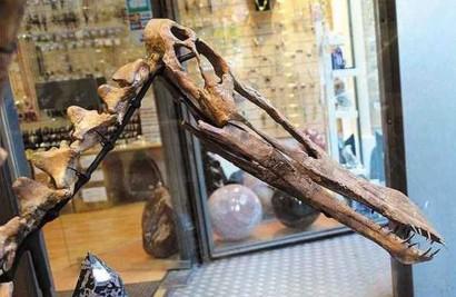 fóssil brasileiro estava sendo vendido em site francês