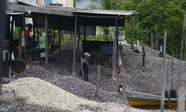 O acúmulo de conchas de sururu e marisco na Ilha de Deus chamou a atenção de pesquisadores para os problemas ambientais - Foto: Arthur de Souza