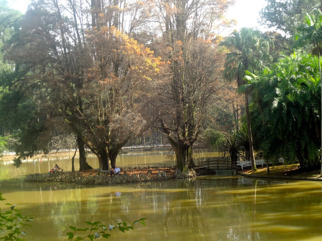 Parque Alberto Loefgren, Horto Florestal de São Paulo