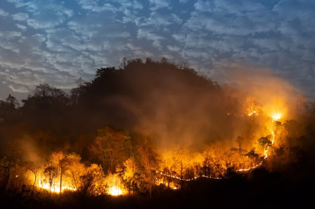 incendio-florestal