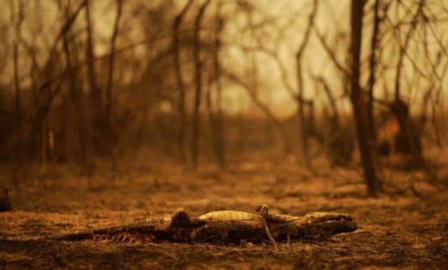incendio-pantanal-780x470