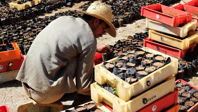 O Instituto Terra constitui a primeira Reserva Particular do Patrimônio Natural (RPPN) surgida em uma área degradada de Mata Atlântica. Uma RPPN é uma unidade de conservação particular, implantada por iniciativa privada e reconhecida oficialmente pelo poder público. (Ines Del Sol e Antonio Garcia)