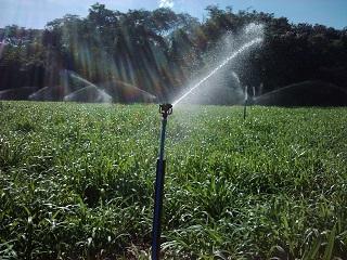 Sistema de irrigação por aspersão (foto), considerado um dos mais eficientes. (Imagem: Reprodução/Internet)
