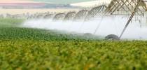 irrigação_foto