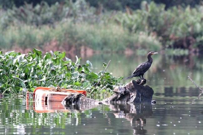 Lagoa da Tijuca (foto: Mário Moscatelli)