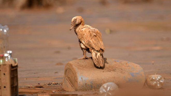 Biodiversidade, a grande vítima da barragem da Samarco.