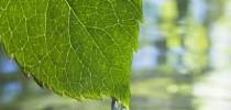 licenciamento_ambiental_foto