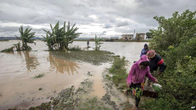 Desastres naturais atingem a safra de baunilha em Madagascar