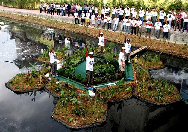 """Instalação dos """"jardins flutuantes"""" cobertos por plantas aquáticas capazes de filtrar os poluentes sem a utilização de produtos químicos."""