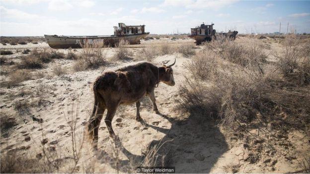 Poeira, sal e produtos químicos que brotam do leito oceânico seco do Mar de Aral estão causando problemas de saúde para os moradores locais (Crédito: Taylor Weidman)