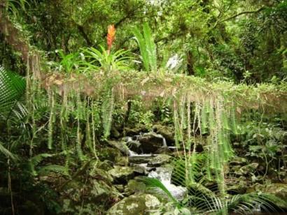 mata-atlantica-fauna-e-flora