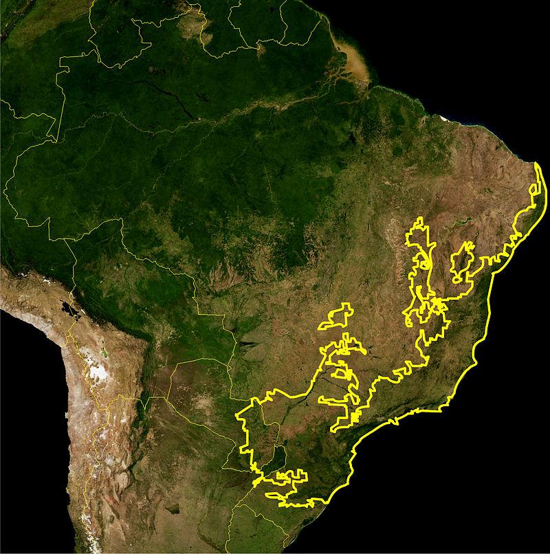 Mapa da ecorregião da Mata Atlântica definida pelo WWF. A linha amarelo escuro representa os limites dessa ecorregião. Imagem de satélite da NASA