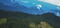 Mata Atlântica (imagem Sosma)