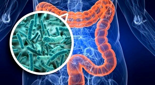 microbiota-intestinal-600x330
