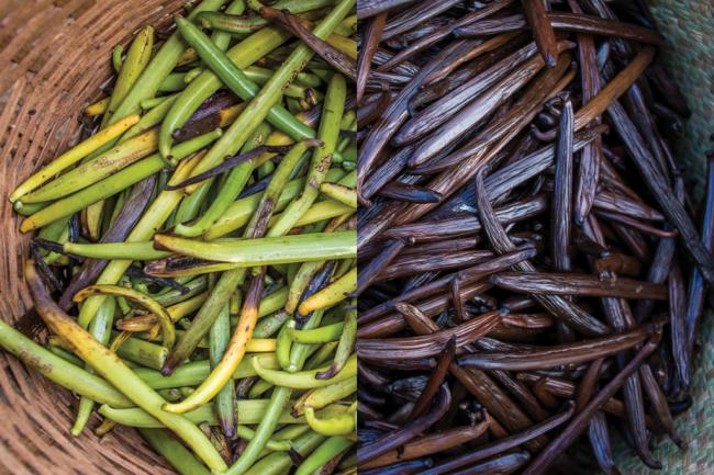 100 kg de favas frescas (à esquerda) viram 15 kg de baunilha seca (à direita) – cada fava rende sete bolas de sorvete. (Fellipe Abreu/Reprodução)