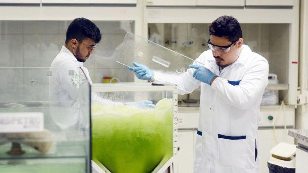 Na limpeza, a água contaminada entra em um tanque (reator) onde estão as microalgas, que se abastecem do carbono. Em seguida, a água limpa é liberada de volta no ambiente (Direito de imagem VICTOR UCHÔA/BBC)