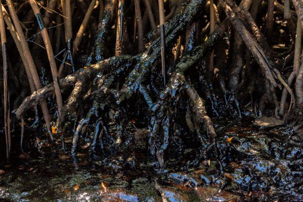 Areas de manguezais baianos também foram atingidas, como as barras dos rios Itapicuru e Pojuca, no litoral norte; na foto, mangue de Itacimirim, nessa região (Direito de Imagem MATEUS MORBECK)