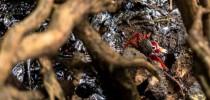 Em áreas de lama como os mangues, com pouca movimentação de água e sedimentos mais finos, é mais difícil fazer a limpeza (direito de imagem MATEUS MORBECK)
