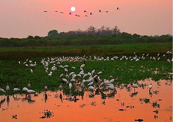 Pantanal brasileiro