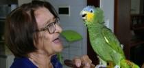 papagaio1