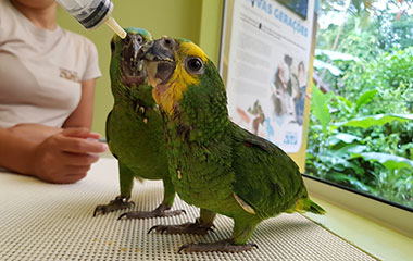 Papagaios filhotes, Parque das Aves