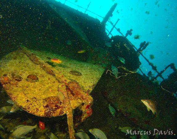 O último navio a naufragar no parcel de Manuel Luís foi o petroleiro Ana Cristina, que afundou em 1984. Embora ainda bem conservada, a carcaça do navio já se encontra tomada por algas, esponjas e peixes. (foto: Marcus Davis)