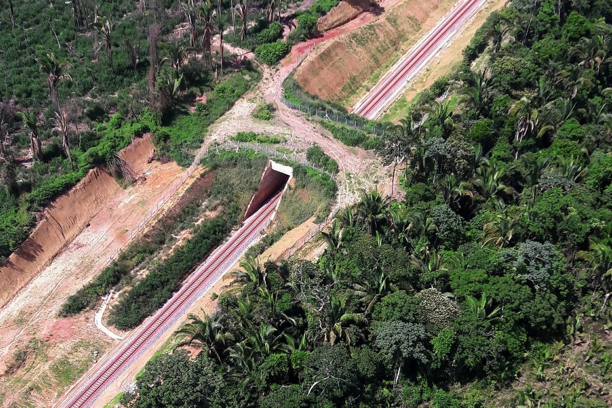 Primeiro viaduto para travessia de fauna do país - foto Ibama