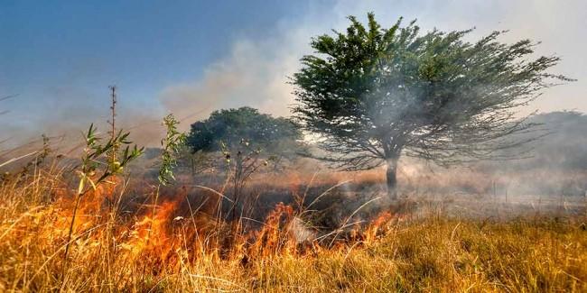 Estudo defende a necessidade da queima criteriosa para a preservação da mais rica savana do mundo, prodígio de biodiversidade e berço de importantes rios brasileiros