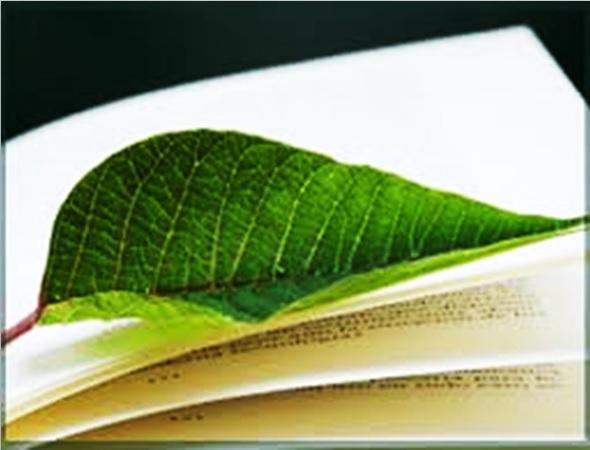 relatorioambiental