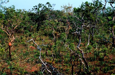 Áreas naturais estão em risco por conta da disposição irregular de entulho - enquanto isso, empresas legalmente estabelecidas, deixam de ser demandadas pela construção civil...