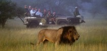 Safari turistico nas savanas da África do Sul.
