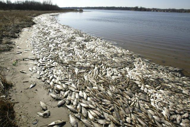 sardinhas-radiação-fukushima-costa-oeste-eua