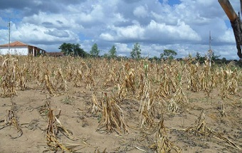 Elevação do clima pode alterar frequência de chuvas na região Nordeste, afetando produção agrícola. (Imagem: Reprodução/Internet)