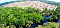 Floresta Amazônica (foto Clovis Miranda)