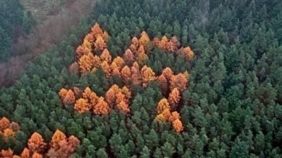 suástica na floresta negra