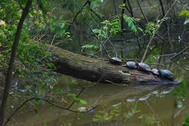 tartarugas-parque burle marx